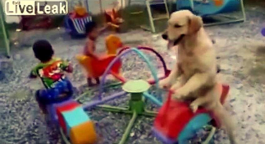 Dog Absolutely LOVES His First Time on the Merry-Go-Round