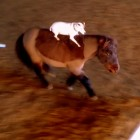 Tiny Dog Is a Pony-Jumping Master