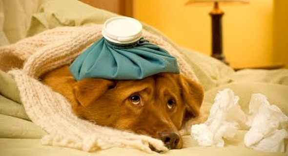 4.15.15 - Deadly Canine Flu Is Sweeping the Midwest