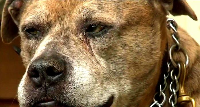 Brave Dog Stops Murderer from Killing His Family