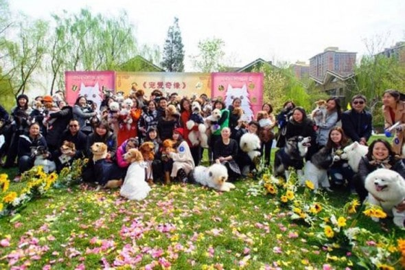 Barking Mad Wedding For Dogs In China