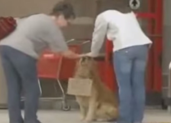 Man Trains Dog to Be Unofficial Greeter at Local Store