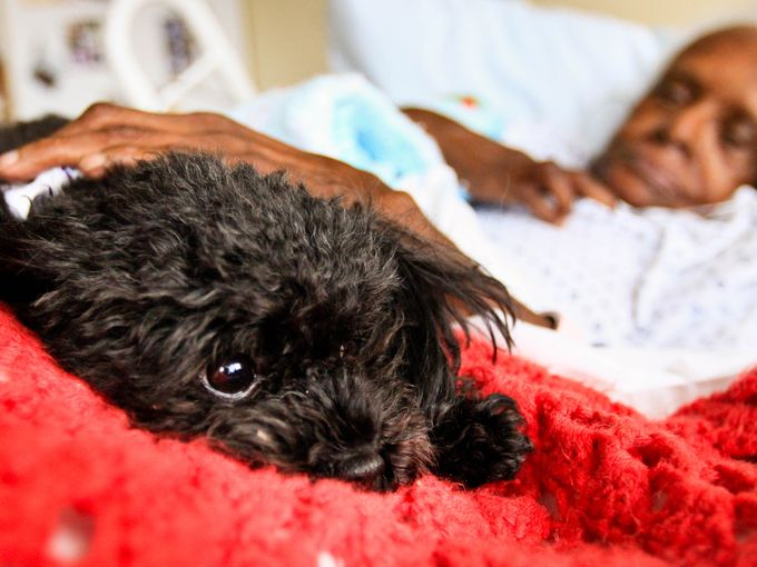 "Amazing Dog ""Works"" Comforting Elderly at Nursing Home"