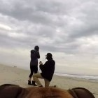 Dog Catches Marriage Proposal for her Human