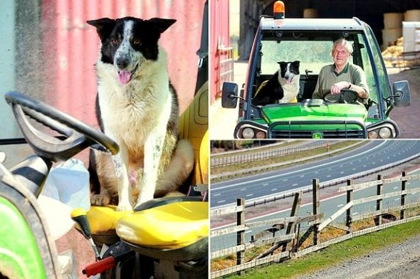 4.22.15 - Border Collie Goes for a Ride on a Stolen Tractor2