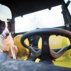 Dog Goes for Joyride in His Human's Tractor