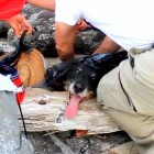 4.24.15 - Complete Strangers Unite to Keep a Dog from Dying in a Tar Pit1