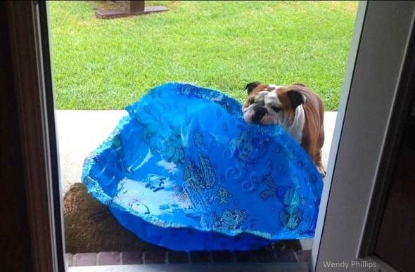 4.26.15 - Gus REALLY Wants an Indoor Pool2