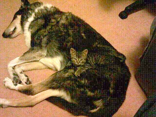 Pets Who Are Brilliant At Hiding In Plain Sight Life