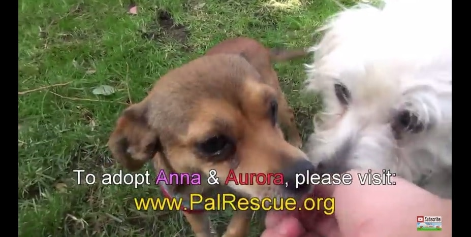 Best Mates Rescued and Need a Home