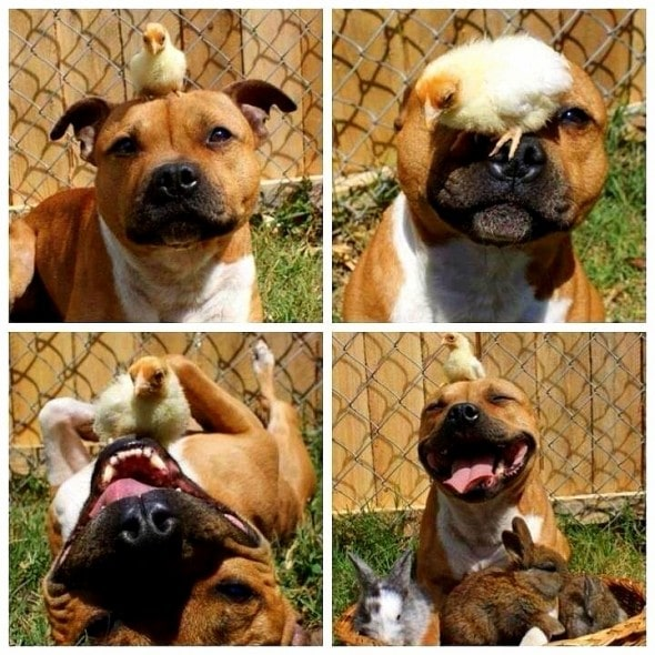 4.3.15 - Dogs and Baby Animals15