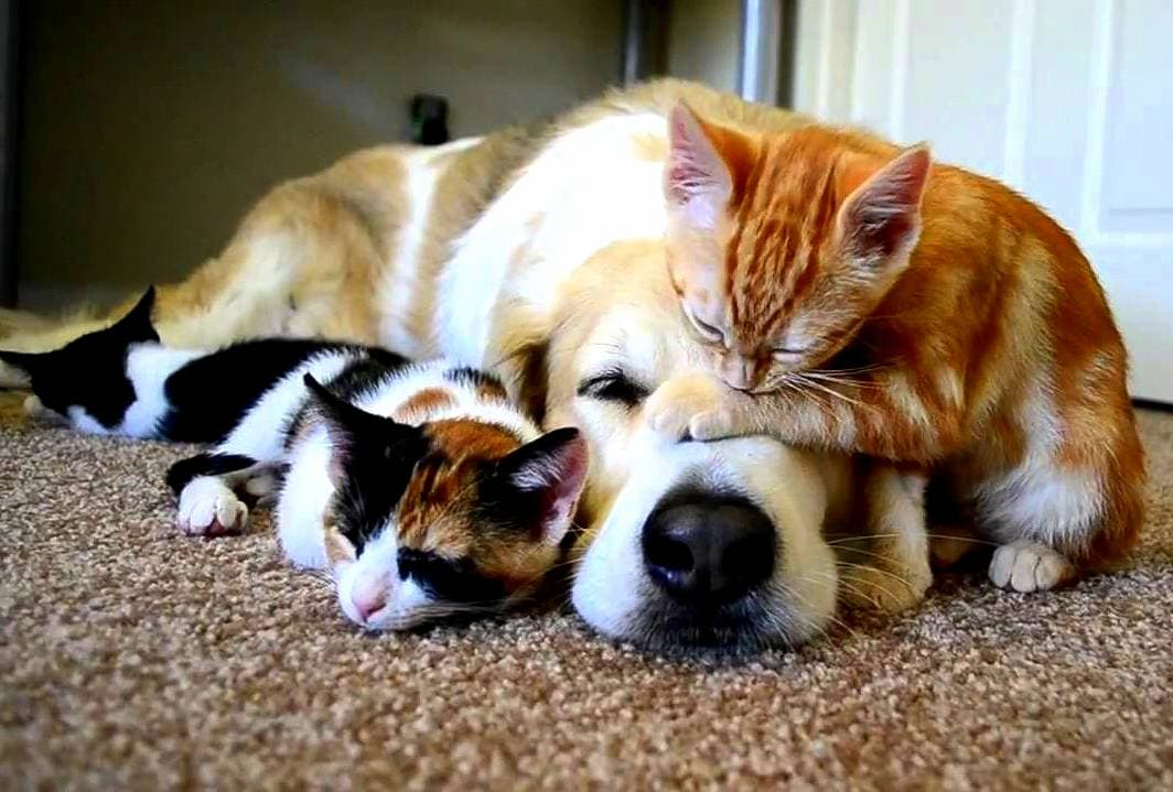 Cute dog and cat friends - photo#27