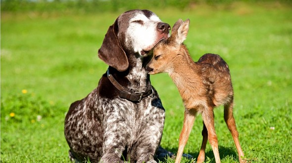 4.3.15 - Dogs and Baby Animals2