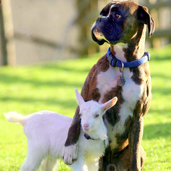 4.3.15 - Dogs and Baby Animals21