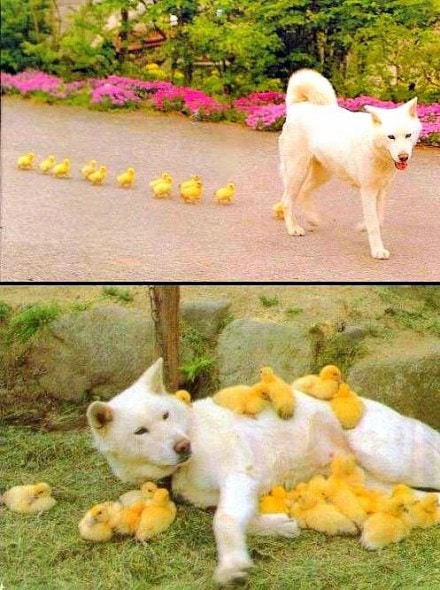 4.3.15 - Dogs and Baby Animals23