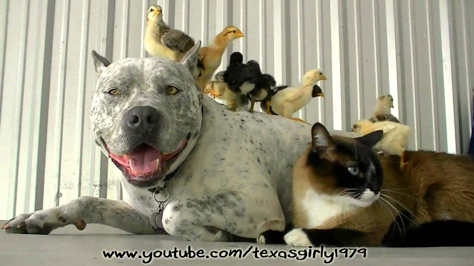 Animal Odd Couples Youtube beautiful photos of dogs loving their baby animal friends