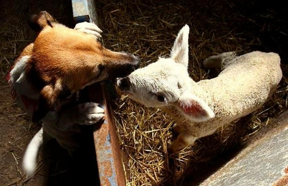 4.3.15 - Dogs and Baby Animals6