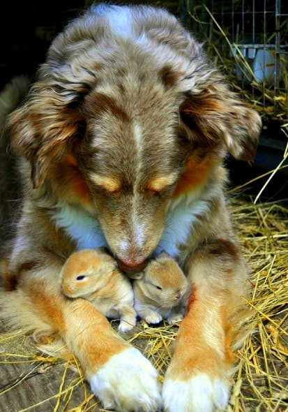 4.3.15 - Dogs and Baby Animals8