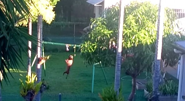 4.30.15 - Dog Makes His Own Swingset1