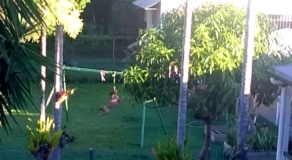 4.30.15 - Dog Makes His Own Swingset2