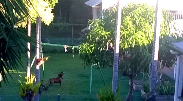 4.30.15 - Dog Makes His Own Swingset3