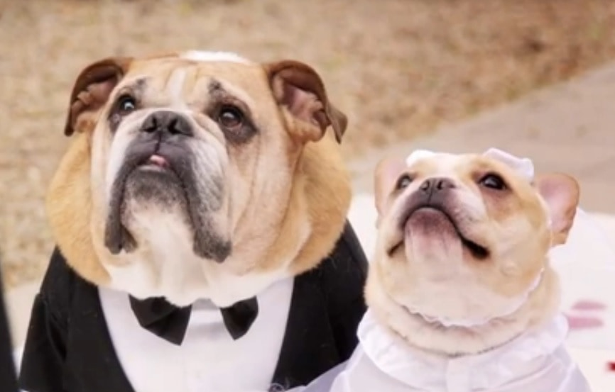 Looking for Entertainment for Your Big Dog Wedding, Why Not John Legend?