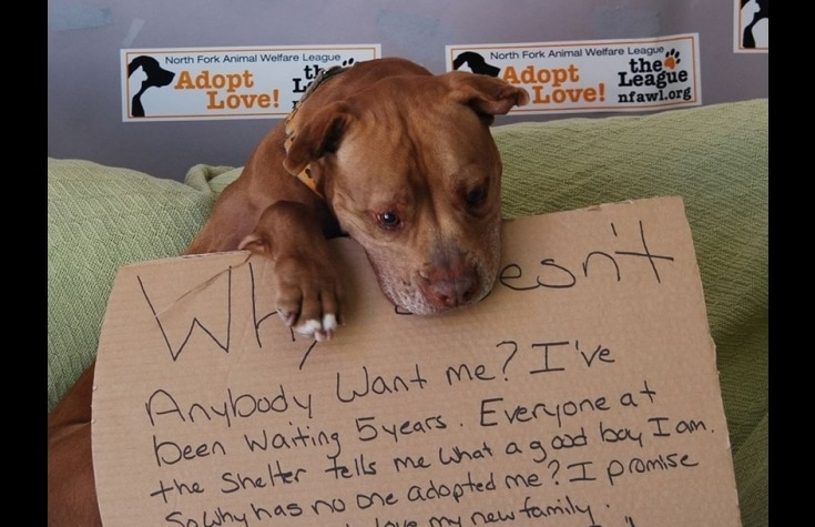 Photo Contributes to Adoption After Five-Year Shelter Stay