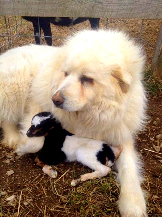 how to take care of a newborn baby dog