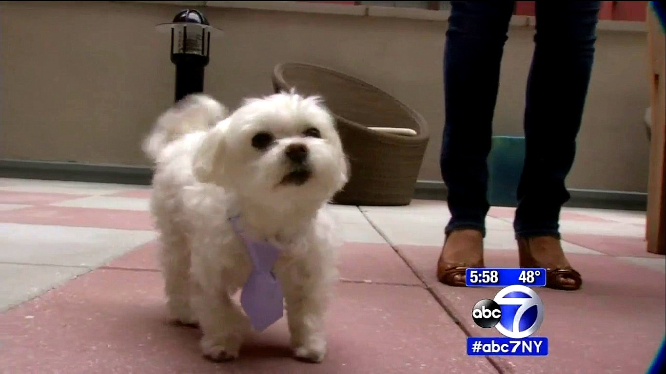 Port Authority Police Officer Saves Dog from Choking to Death