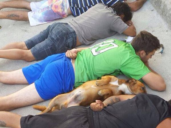 Dog Joins Fellow Gang Members on Ground During Arrest