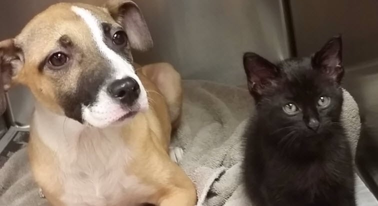 Detroit Animal Rescuer Saves Puppy and Kitty
