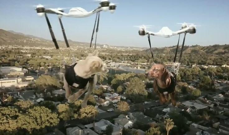 Drones Deliver Puppy