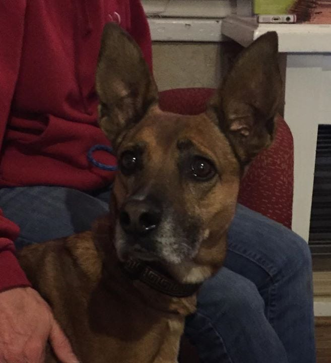 Dog Lost for Two Years Recently Found in Abandoned Home