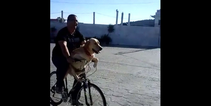 Dog Loves Bicycle Rides