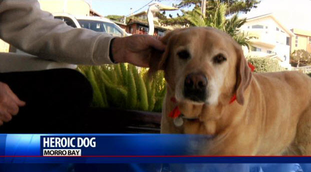 Senior Dog Saves 89-Year-Old Woman