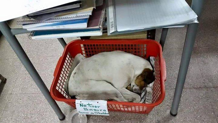 Social Media Helps Stray Dog Sleeping in Library Find Forever Home