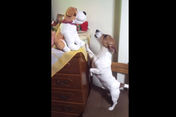Dog Tries to Sing Along
