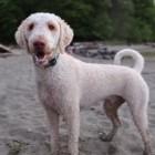 Video: Dog Has a Blast in Seattle
