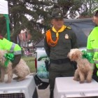 Police Officers Save Five Dogs from House Fire