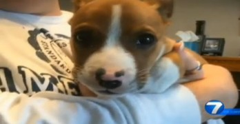 Petey the Puppy Survives Fatal Crash