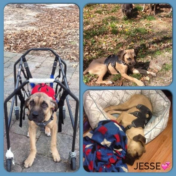 150523-Jesse4
