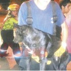 Frias firefighters rescue dog from well.