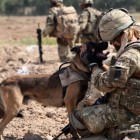 Remembering Our Dog Heroes On Memorial Day
