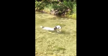 Dog Swims Against Current