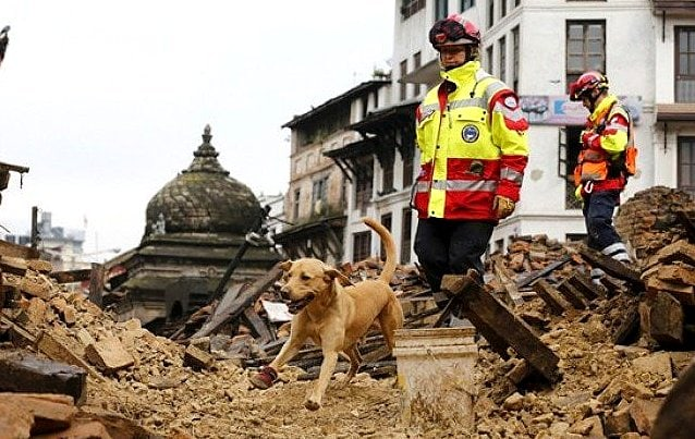 Rescue Dogs Are Saving Lives in Earthquake-Devastated Nepal