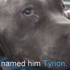 5.14.15 - Tyrion rescue