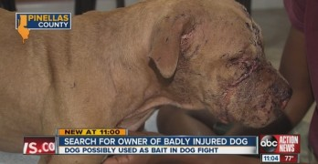Woman Who Saved Fight Dog Now Searching for Answers