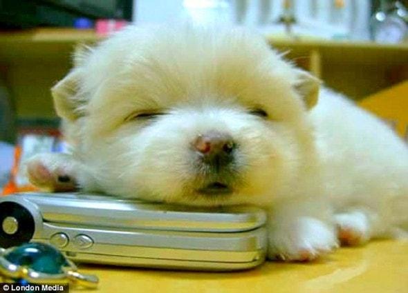 5.16.15 - Cutest Sleeping Puppies1