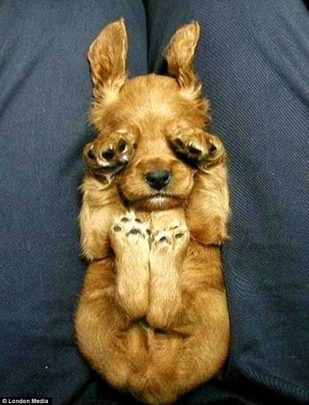 5.16.15 - Cutest Sleeping Puppies14