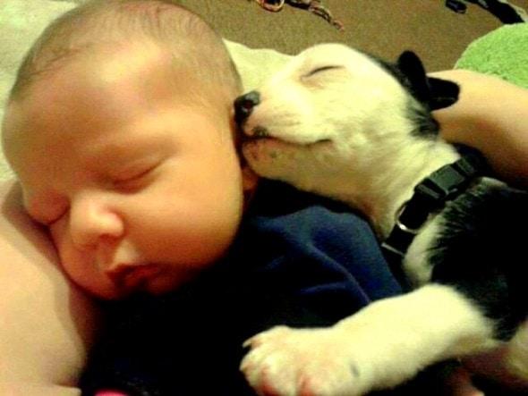 5.16.15 - Cutest Sleeping Puppies15
